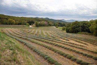 Week-end dans la Drôme Provençale : spécialités culinaires et savoir-faire