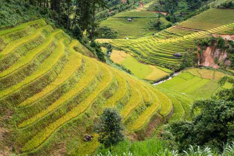 la pan tan rizières vietnam