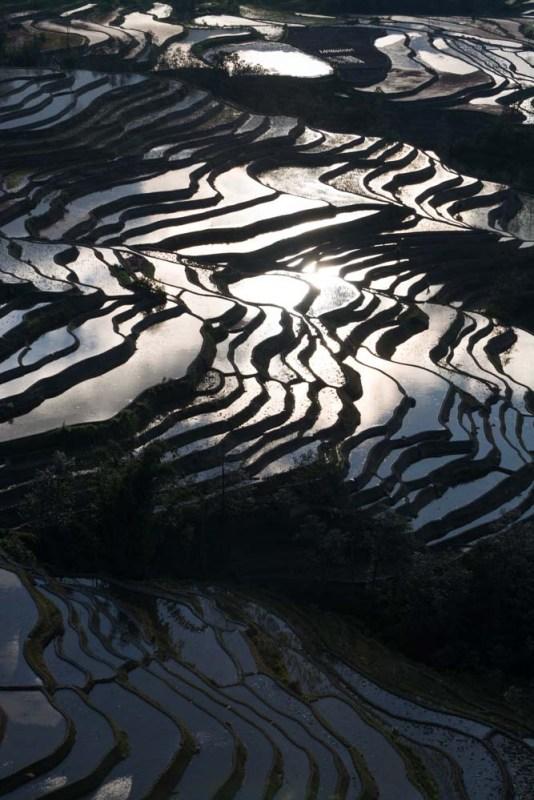 yuanyuang