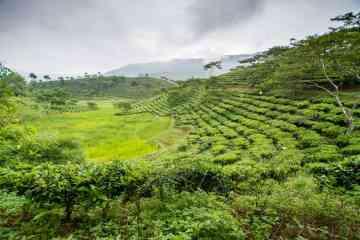 Muong Lo Vietnam Route 32