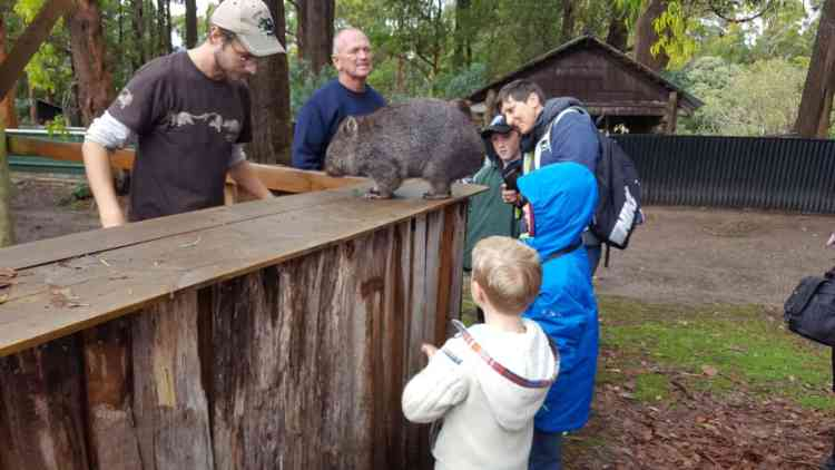 trowunna wombat