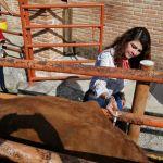 Iliana Montes pone en marcha tercera Jornada de Vacunación y Sanidad Animal en Arroyo Seco