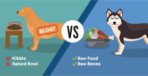 Preventing Bloat In Dogs Naturally