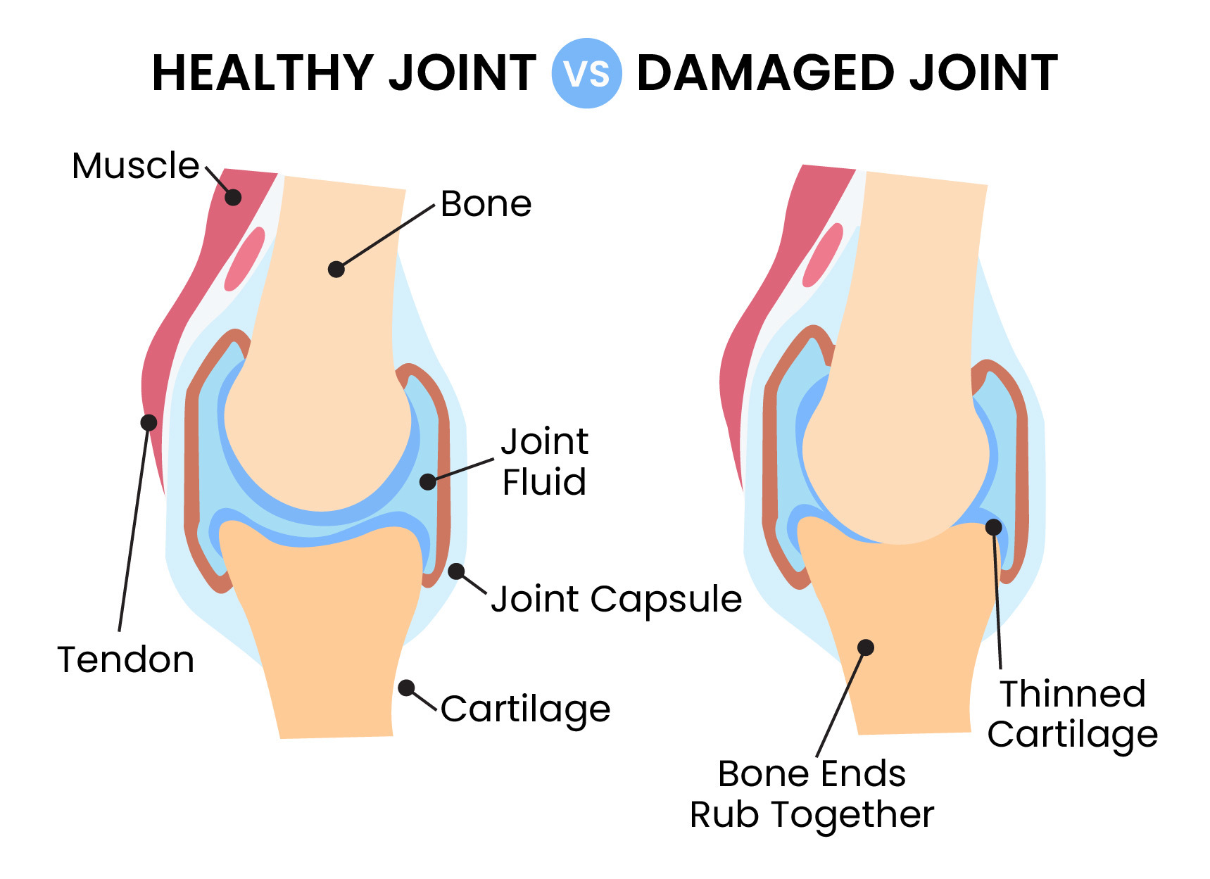 hight resolution of dog joint health
