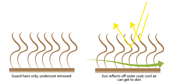 Graphic showing how dogs' coats can reflect heat from the sun
