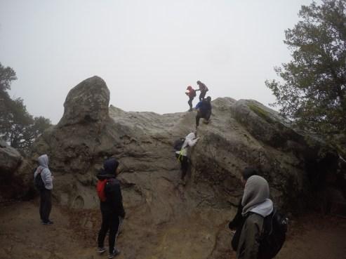 goats climbing up Goat Rock.
