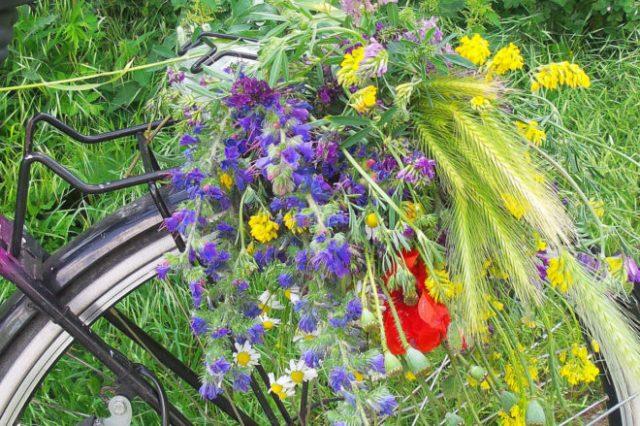 blumen, wildblumen, gepaecktraeger, fahrrad, strauss, blumenstrauss