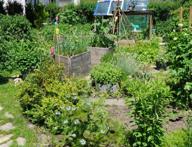 Gemüsegarten im Juni  2016