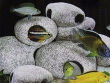 Камни для аквариума: виды, применение и уход kamni dlya akvariuma vidy vybor i primenenie 4 AquaDeco Shop