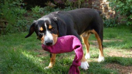 Hur man gör leksaker för hundar med egna händer?