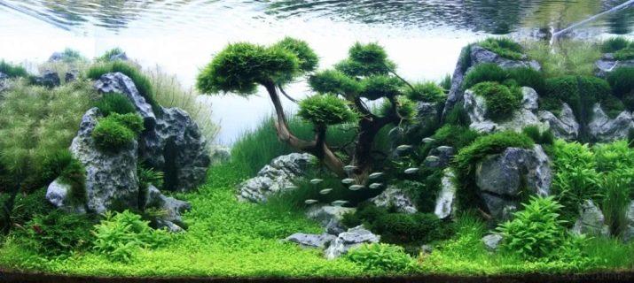 Камни для аквариума: виды, применение и уход kamni dlya akvariuma vidy vybor i primenenie 24 AquaDeco Shop