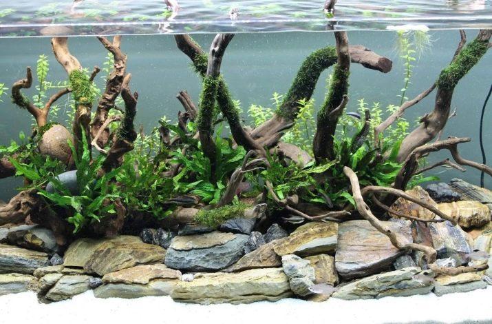 Камни для аквариума: виды, применение и уход kamni dlya akvariuma vidy vybor i primenenie 25 AquaDeco Shop