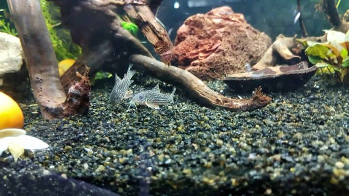 Как выбрать аквариумный грунт: виды, советы и правила grunt dlya akvariuma vidy vybor i primenenie 20 AquaDeco Shop