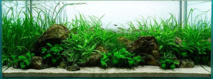 Как выбрать аквариумный грунт: виды, советы и правила grunt dlya akvariuma vidy vybor i primenenie 21 AquaDeco Shop