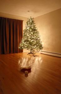 OGDEN UTAH Should You Exchange That Carpet for Hardwood