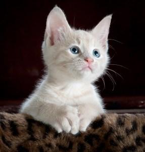Kattenbed