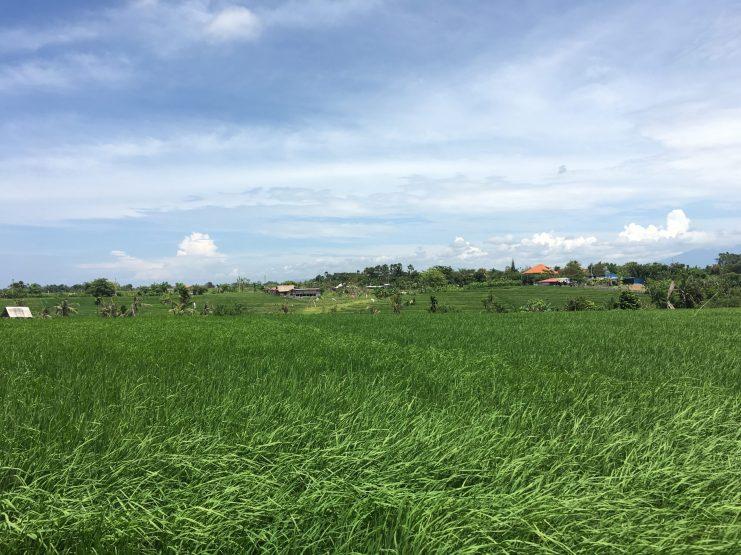 Через рисовые поля