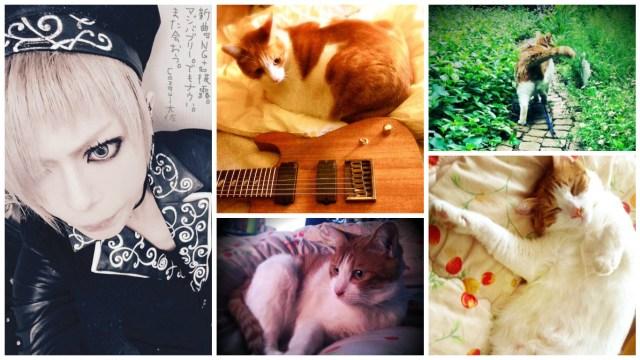 NOCTURNAL BLOODLUST Cazqui cat