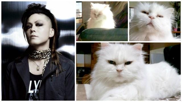 lynch. Asanao cat