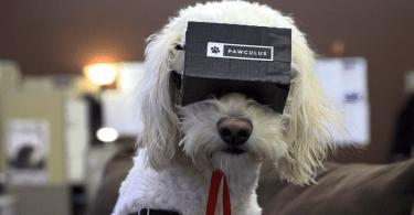 pawculus VR