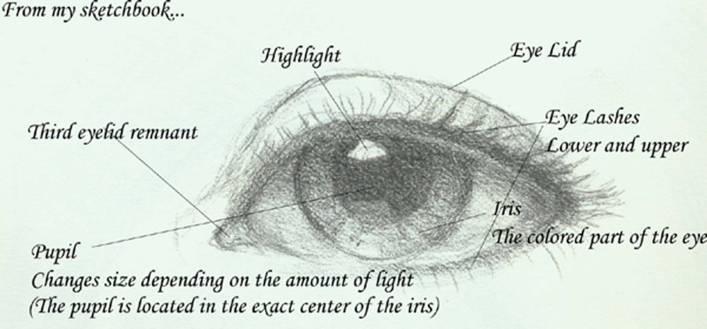 medium resolution of seeing the eye in a new light v rtifacts rh vrtifacts com cow eye parts blank