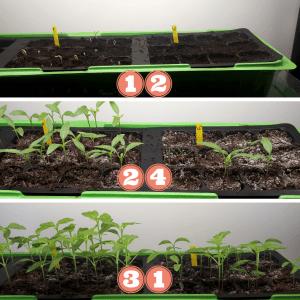 povečanje kaljivosti semen, boljša kaljivost semen, boljši koreninski sistem sadik