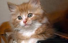 котенок Дуня