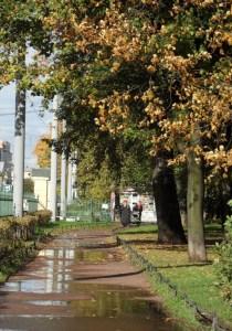 я люблю тебя мой старый парк3