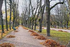 я люблю тебя мой старый парк