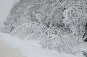 лес по дороге на Кукобой