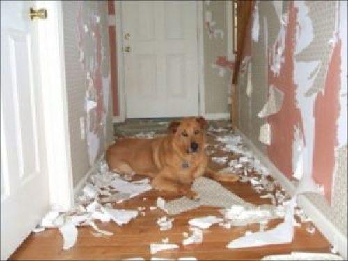 Подготовка к ремонту квартиры или дома