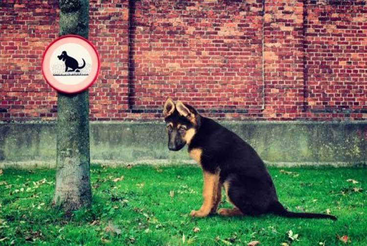 Кучето се изходи на тротоара