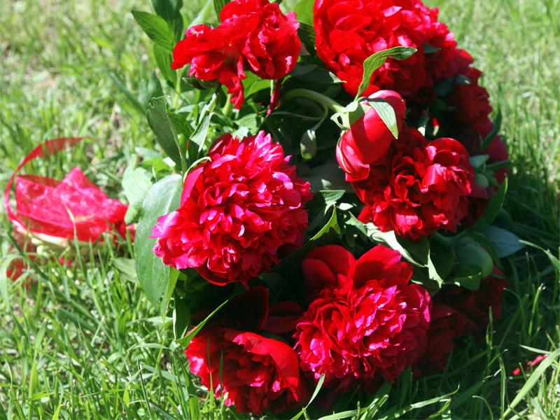 Как правильно разделить куст пиона в весенний период