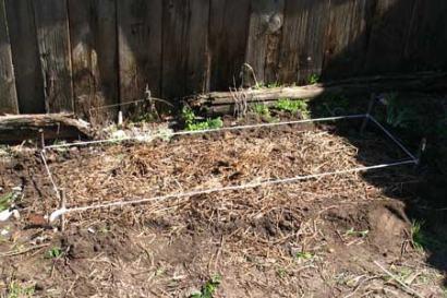 посадить топинамбур