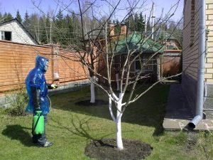 Меры безопасности при обработке деревьев весной мочевиной