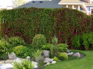 Ландшафтный дизайн дачи и варианты зеленых насаждений