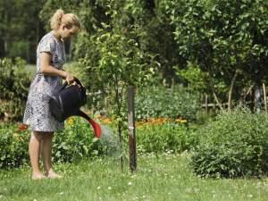 Применение мочевины на огороде для удобрения деревьев и кустарников