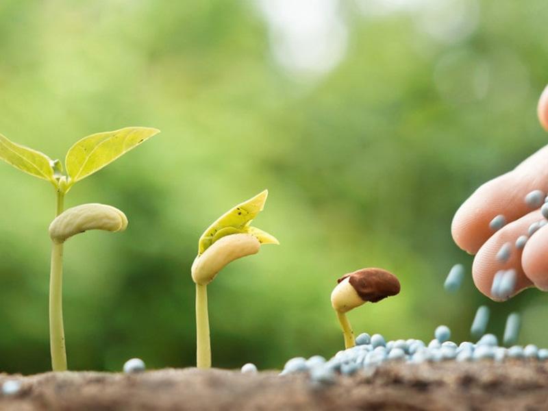 Чем лучше подкормить рассаду для активного роста