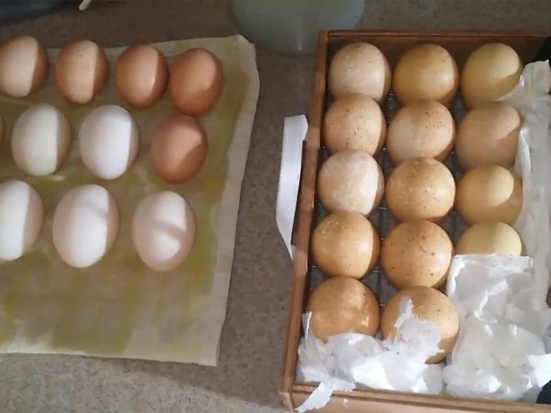 Инкубация яиц цесарки и выбраковывание яиц