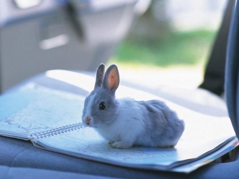 Какие прививки надо делать кроликам