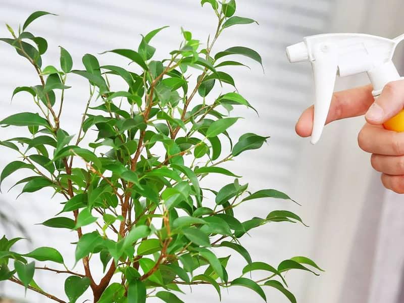 Как обрабатывать Интавиром комнатные растения