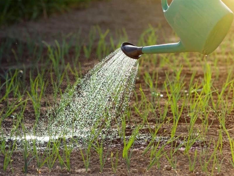 Удобрение Эффектон для питания почвы и хорошего урожая