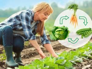 Что можно сажать после капусты