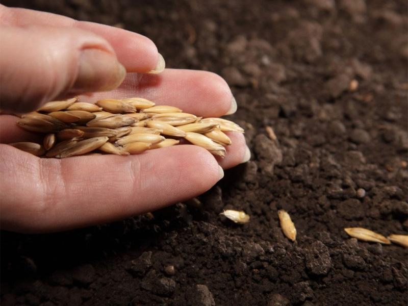 Какие цветы можно посадить семенами под зиму и как организовать процесс