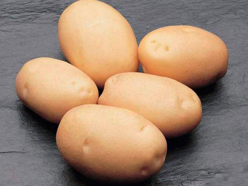сорт картофеля гранада