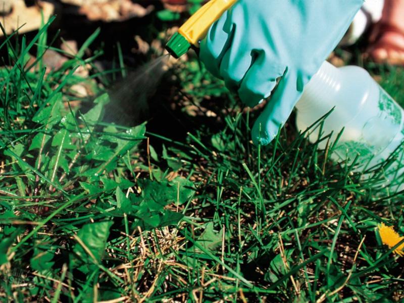Средство от сорняков «Ураган» и как нужно распылять