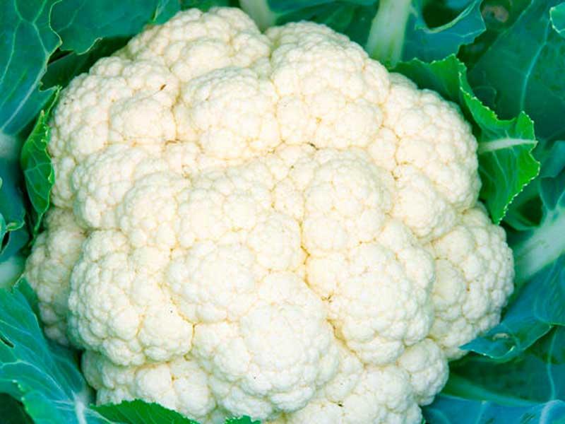 Гарантия Сорт цветной капусты