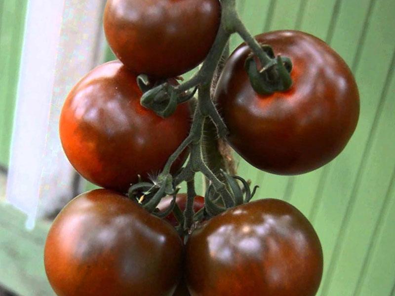 Характеристики и назначение плодов Виагры
