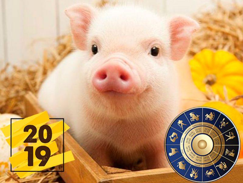 God Svin'i 2019 dlya znakov zodiaka