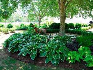 Тени любимые растения на садовом участке